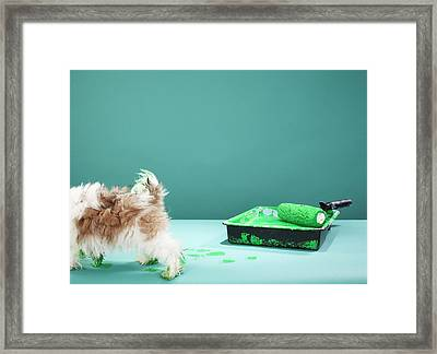 Puppy Making Green Paw Prints From Paint Tray Framed Print