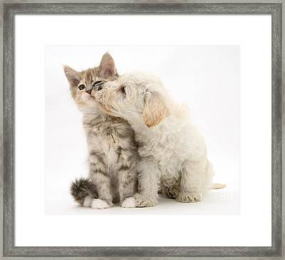 Puppy Nuzzles Kitten Framed Print by Jane Burton