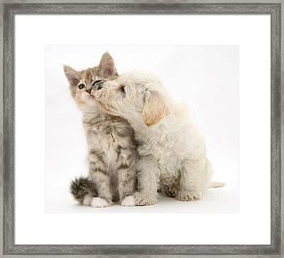 Puppy Nuzzles Kitten Framed Print by Jane Burton