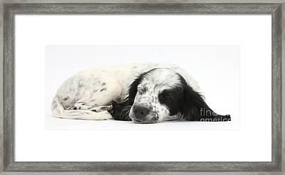 Puppy Sleeping Framed Print by Mark Taylor
