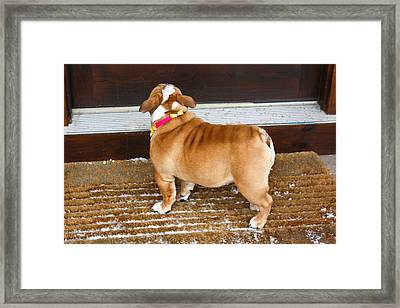 Framed Print featuring the photograph Puppy Waiting At The Door by Ann Murphy