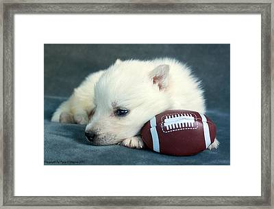Puppy With Football Framed Print by Tyra  OBryant