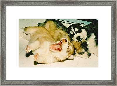 Puppy Yawn Framed Print by Lynda Dawson-Youngclaus