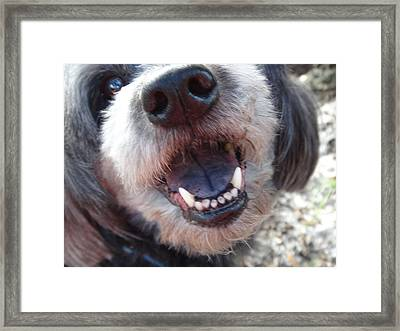 Framed Print featuring the photograph Puppyface by Ginny Schmidt