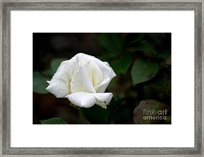 Framed Print featuring the photograph Pure As Snow by Living Color Photography Lorraine Lynch