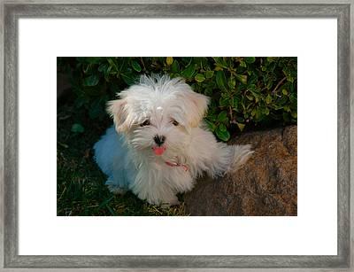 Pure Cuteness Framed Print by Lynn Bauer