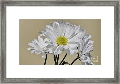 Pure Framed Print by Nancie DeMellia