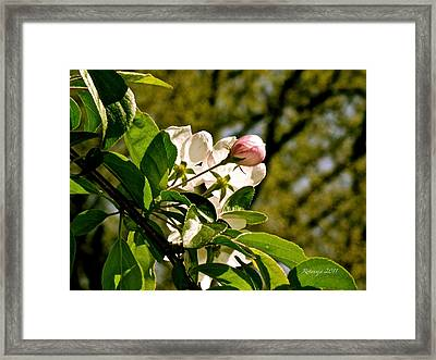 Pure Opportunity Framed Print by Rotaunja