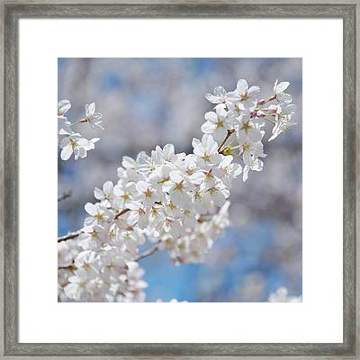 Pure Framed Print by Photograph by Paul Atkinson