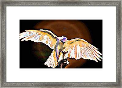 Pure Whtie Raptor Framed Print by Carrie OBrien Sibley