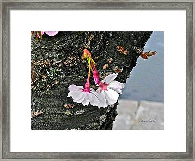 Pure Wisdom Framed Print by Rotaunja