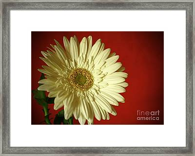 Purity And Passion Framed Print by Inspired Nature Photography Fine Art Photography