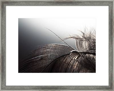 Purity Framed Print by Ivan Vukelic