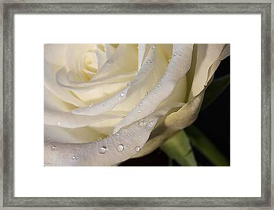Purity Framed Print by Shirley Mitchell
