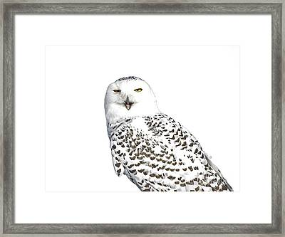 Purity- Snowy Owl In The Winter Snow Framed Print by Inspired Nature Photography Fine Art Photography