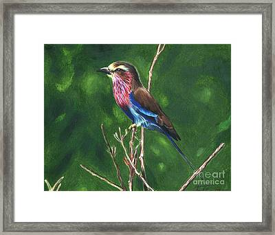 Purple And Blue Bird Framed Print