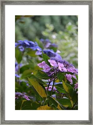 Purple And Green Framed Print by Bonnie Myszka