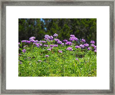 Purple And Green Framed Print by Rebecca Cearley