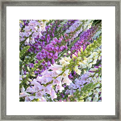 Purple And White Foxglove Square Framed Print by Carol Groenen