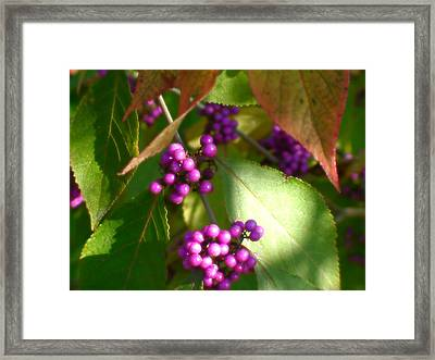 Purple Beads Framed Print by Lee Yang