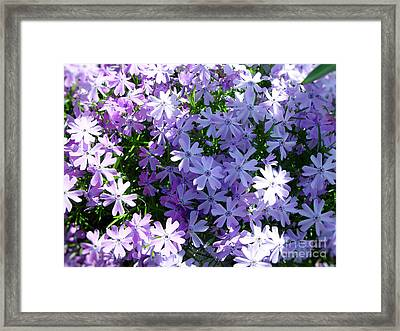 Purple Bed Framed Print