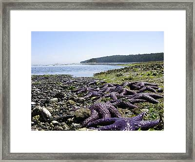 Framed Print featuring the photograph Purple by Brian Sereda