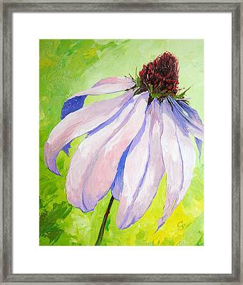 Purple Coneflower Framed Print