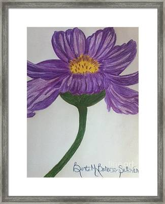 Purple Cosmo Framed Print by Berta Barocio-Sullivan