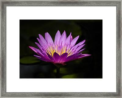 Purple Delight Framed Print by Carolyn Marshall