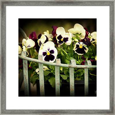 Purple Delights Framed Print