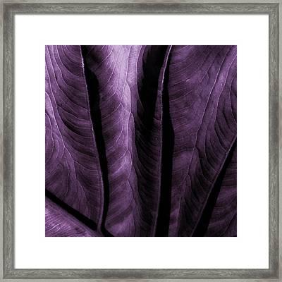 Purple Elephant Leaf Framed Print by Bonnie Bruno