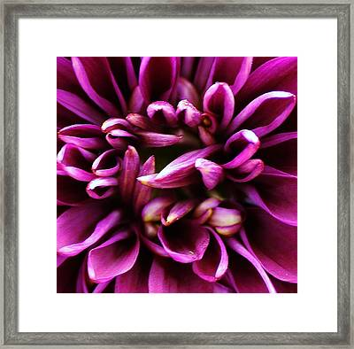 Purple Explosion Framed Print by Bruce Bley