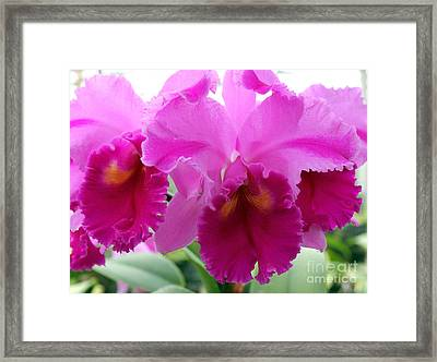 Framed Print featuring the photograph Purple Explosion by Debbie Hart
