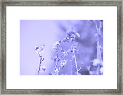 Purple Field Framed Print