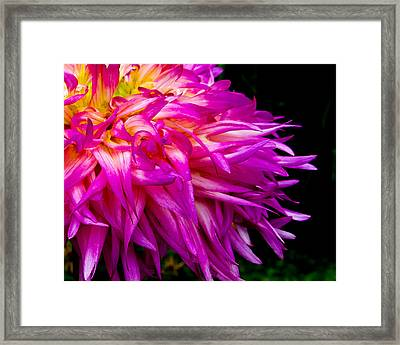 Purple Flames Framed Print by Michael Taggart
