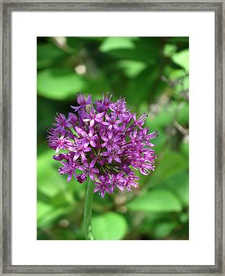 Purple Floral Framed Print by Rebecca Overton
