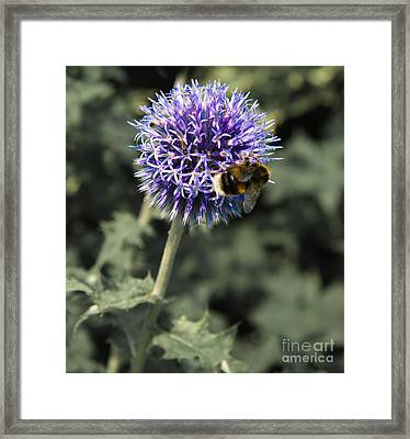 Purple Flower And Bee Framed Print by Jo