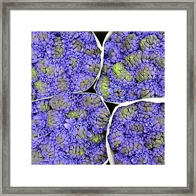 Purple Flower Bouquet At Market Framed Print by (c) Jean-Michel VOLAT - jmvnoos on Flickr