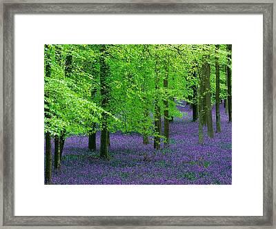 Purple Flower Carpet For Green Trees Framed Print by ilendra Vyas