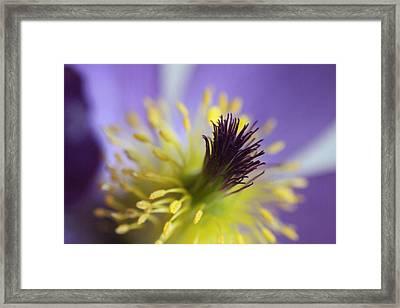 Purple Flower Center Framed Print by Mark J Seefeldt