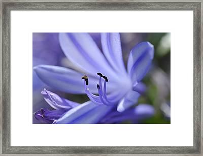Purple Flower Close-up Framed Print by Sami Sarkis