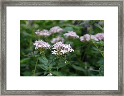 Purple Flower Framed Print by Jennifer Ancker