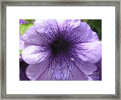 Purple Flower Framed Print by Portia Petty