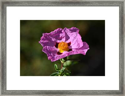 Framed Print featuring the photograph Purple Flower by Rima Biswas