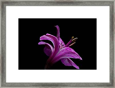 Purple Flower Framed Print by Ron Smith