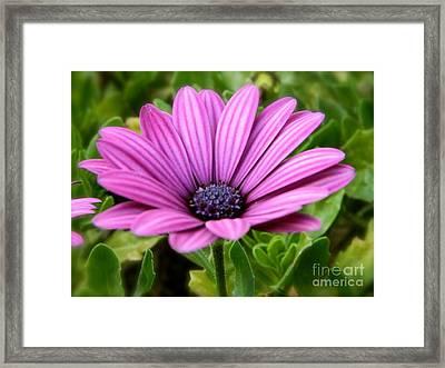 Purple Flower Framed Print by Sara  Mayer