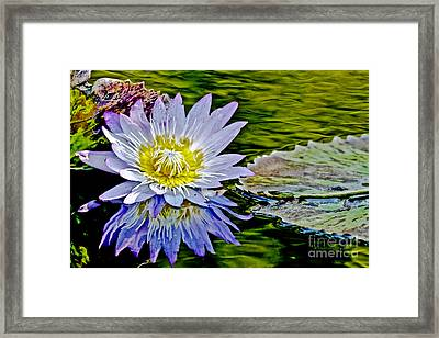 Purple Water Lily Framed Print by Carol F Austin