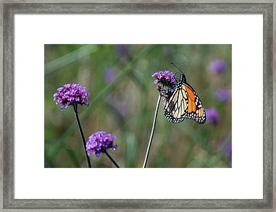 Purple Flower With Butterfly Framed Print