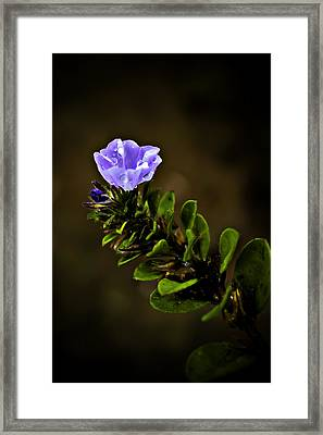 Purple Flower With Rain Drops Framed Print by Mr