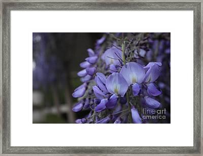 Purple Flowers Framed Print by Allen Jiang
